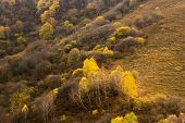Rocky Landscape In The Autumn In The Mountains. Coniferous And Deciduous Trees Growing On A Hill. Hi poster