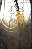 Autumn Leaf On A Branch In A Sunny Forest. Solar Spectrum poster
