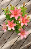 stock photo of asiatic lily  - Asiatic Lily with blooms and buds with light streaks on a wooden background - JPG