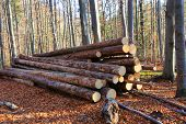 A pile of wooden logs lie on forest meadow. Stacks of wooden logs. Autumn landscape. poster