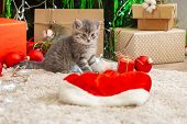 Christmas Cat. Christmas Presents Concept. Tabby Kitten Near Santa Clause Hat. Portrait Of Kitten Wi poster