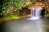 stock photo of coy  - Waterfall spilling into coy fish or goldfish pond - JPG