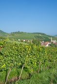 Birkweiler,german Wine Route
