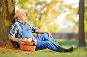 stock photo of dungarees  - Male worker in dungarees with basket full of harvested apples sitting in orchard - JPG