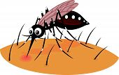 stock photo of malaria parasite  - Vector illustration of Mosquito cartoon sucking blood from human skin - JPG