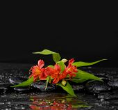 still life with branch red orchid on black pebbles