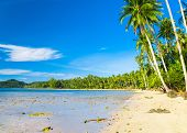 Beautiful Beach Palm Panorama