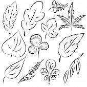 Set of leaves, collection of hand-drawn leaves. Rasterized Copy