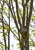 pic of flytrap  - tree with its flycatcher birdhouse - JPG