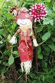 picture of scarecrow  - Scarecrow Protecting a Field of Large Dahlia Flowers - JPG