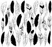 pic of feathers  - Vector Set of Stylized or Abstract Feathers and Feather Silhouettes - JPG