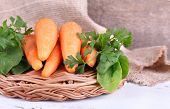 pic of sorrel  - Carrots - JPG