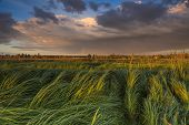 pic of marshes  - Landscape with marsh overgrown sedge. Beautiful rural landscape ** Note: Shallow depth of field - JPG