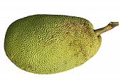 foto of spiky plants  - Ripe Jackfruit Jack Fruit isolated on white background - JPG