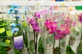 picture of flower shop  - A beautiful colorful flowers in flower shop - JPG