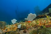 picture of shipwreck  - Shipwreck Encrusted with Colorful Corals and Sponges  - JPG