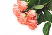 image of bunch roses  - Bunch of pink roses isolated close up - JPG