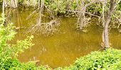 stock photo of swamps  - Wild swamp water and murky green brown water - JPG