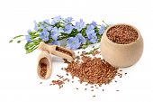 foto of flaxseeds  - flowers and flaxseeds isolated on a white background - JPG