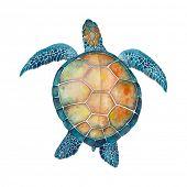 stock photo of sea-turtles  - Watercolor Sea Turtle - JPG