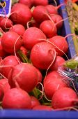pic of radish  - radishes grown in my small garden city - JPG