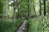 pic of mud  - a wooden walkway thru the woods keeps you out of the mud - JPG