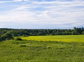 image of cloudy  - Field in the woods on a sunny day - JPG