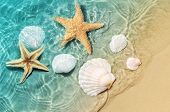 Starfish And Seashell On The Summer Beach In Sea Water. Summer Background. Summer Time. poster