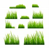 Green Grass Vector Illustration Isolated. Summer Natural Grassy Green Plant For Garden. Grass Templa poster
