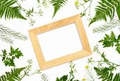 Herbal Botany Decorative Background Wth A Frame, Flat Lay Composition, Space For A Text poster