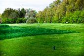 Green Grass On The Golf Fields. Concept With Sport Field. Landscape View Of Golf Course With Trees I poster