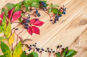Close-up Of Wild Grape Berries On A Wooden Background poster