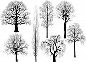 stock photo of linden-tree  - Collection of trees in black over white background - JPG