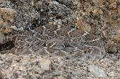 stock photo of western diamondback rattlesnake  - A Western Diamondback Rattlesnake is blending in among the rocks in the desert in Arizona - JPG
