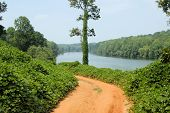 stock photo of kudzu  - Along the Catawba River in western North Carolina