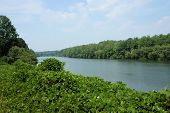 picture of kudzu  - Along the Catawba River in western North Carolina