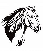Decorative Monochrome Contour Portrait Of Running Horse With Long Mane Looking In Profile, Vector Il poster