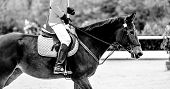 Sorrel Dressage Horse And Rider In Red Uniform Performing Jump At Show Jumping Competition, Black An poster