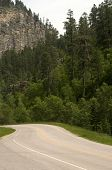 image of spearfishing  - Road in Spearfish Canyon with Pine Tress - JPG
