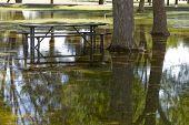 image of cortez  - Standing rain water of monsoon season in Cortez park Phoenix Arizona - JPG