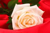 image of red rose  - Beautiful rose on red cloth - JPG