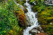 Scenic Landscape With Clear Spring Water Stream Among Thick Moss And Lush Vegetation. Mountain Creek poster