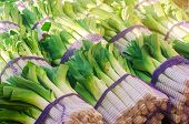 Fresh Leek In Net Bags Ready For Sale. Harvest. Harvesting. Agriculture And Farming. Freshly Picked. poster