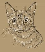 Vector Hand Drawing Portrait Of Snow Bengal Cat In Black And White Colors Isolated On Beige Backgrou poster