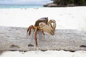 foto of poo  - close up of Poo Kai crab in Tachi island Phang - JPG