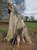 Tree Stump Landscape