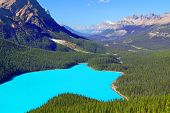 foto of conifers  - Magnificent blue waters of Peyto Lake of Banff National Park in Canada - JPG
