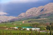pic of south-western  - vineyard in the hills around Cape Town Stellenbosch South Africa - JPG