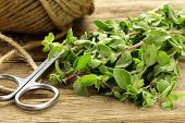 picture of origanum majorana  - fresh organic oregano  - JPG