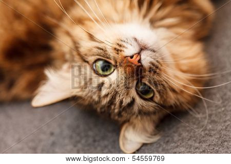 nice cat poster